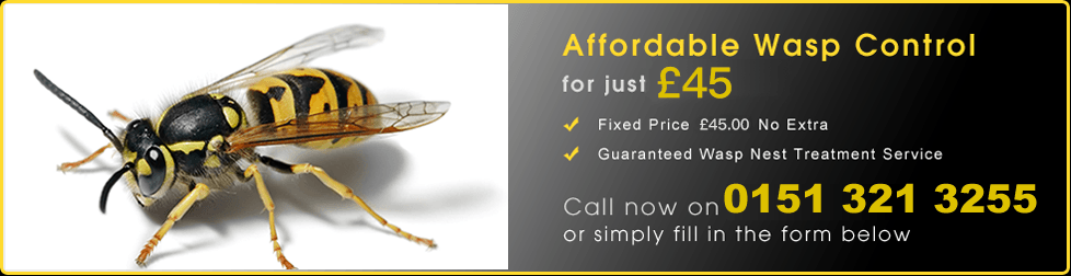 Liverpool Wasp Treatment Services